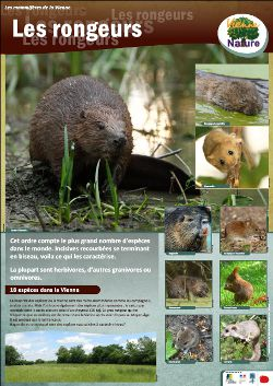Affiche mammifères - Rongeurs © Vienne Nature